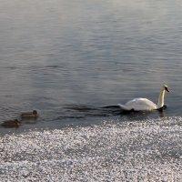 Птицы :: veera (veerra)