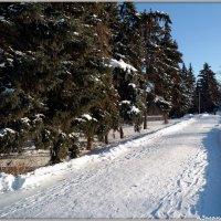 Зимний сквер :: Андрей Заломленков