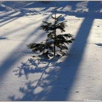 Мороз снежком укутывал... :: Андрей Заломленков