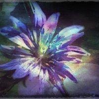 И у зимы цветут цветы.. :: Ирина Сивовол