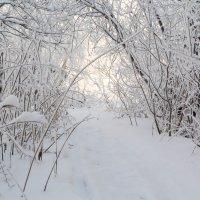 Зимняя сказка :: Алексей. Бордовский