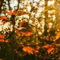 Осенний загар :: Арина