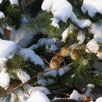 Эту птицу каждый знает, в теплый край не улетает)) :: Мария