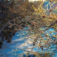 Зима...-24 :: Рома Григорьев