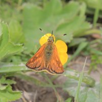Усики бабочки :: Олег Фролов