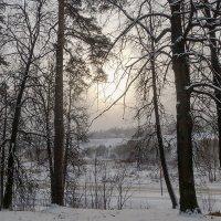 январское солнце :: Galina