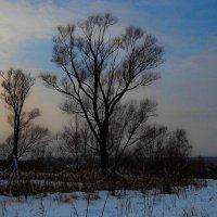 деревья :: Юлия Денискина