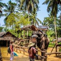 Тайланд :: Надежда