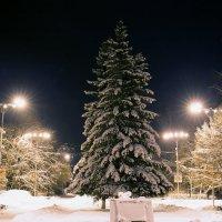 Вечер накануне Рождества :: Юрий Петряев