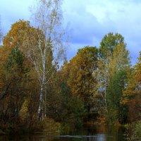 На реке Серёжа. :: Николай Масляев