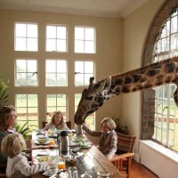 GIRAFFE MANOR :: Volmar Safaris