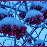 Алеют грозди калины :: Светлана
