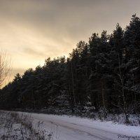 Зимний лес :: Виктор М