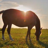 лошадка :: александр макаренко