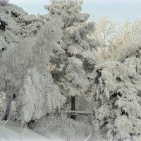 Зимний лес :: Лена Петрова