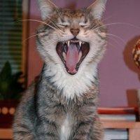 Я -- кот! :: Ирина Жовтяк