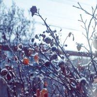 Морозный день :: Денис Будняк