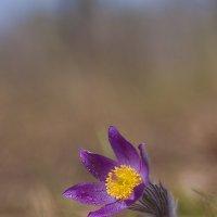 Сон-трава. :: Андрей Ветров