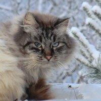 Взгляд... :: Владимир Павлов