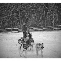катание на собаках хаски :: Natalia Mihailova