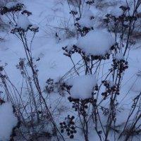 Снежный хлопок :: Калмакова Марина
