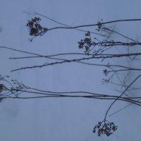 Травы на снегу :: Калмакова Марина