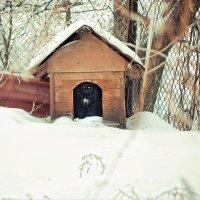 Эх,тяжела жизнь собачья! :: Инна Пивоварова