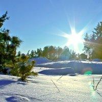 Мороз и солнце, день чудесный!))) :: Екатерина К..