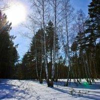 Зимний лес :: Екатерина К..