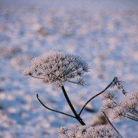 И всех украсил снег январский.... :: Tatiana Markova