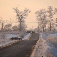 Розовое видение января... :: Tatiana Markova