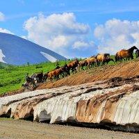 Табун уходит в горы :: Сергей Чиняев
