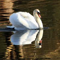 Царевна белая плывёт :: Alexander Andronik