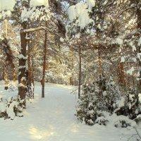 Сосновый лес :: Иван Егоров