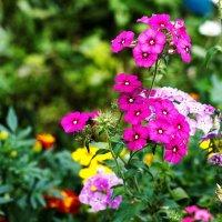 Цветы :: Сергей Михайлов