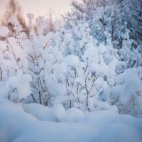 Снегом окутаны... :: Ирина Никифорова