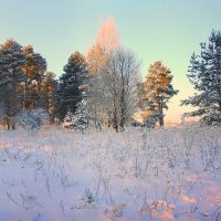 В морозный зимний день :: Павлова Татьяна Павлова
