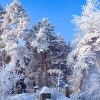 7 января :: зоя полянская