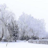 Зима :: Игорь Денисов