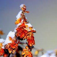 Зима :: Анатолий Мартынюк