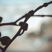 Орхидея :: Есения Censored