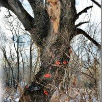 Горят огнем калины ягоды... :: Юрий Ефимов