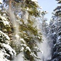 Падал с дерева снег. :: Виталий Дарханов