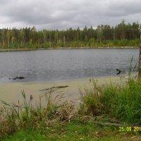 Озеро Смердячье :: Виктор Мухин