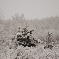 Мир в объятиях зимы :: Алёна Бадьина