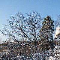 Подмосковная зима :: Galina
