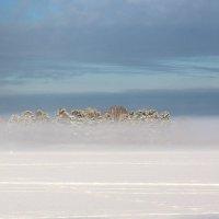 В тумане. :: Андрей Боталов