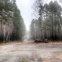 В Белорусском лесу. :: Александр Селезнев