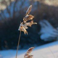 Зима, зима.... :: victor Lion