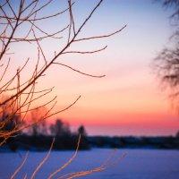 зима :: Александра Вассель